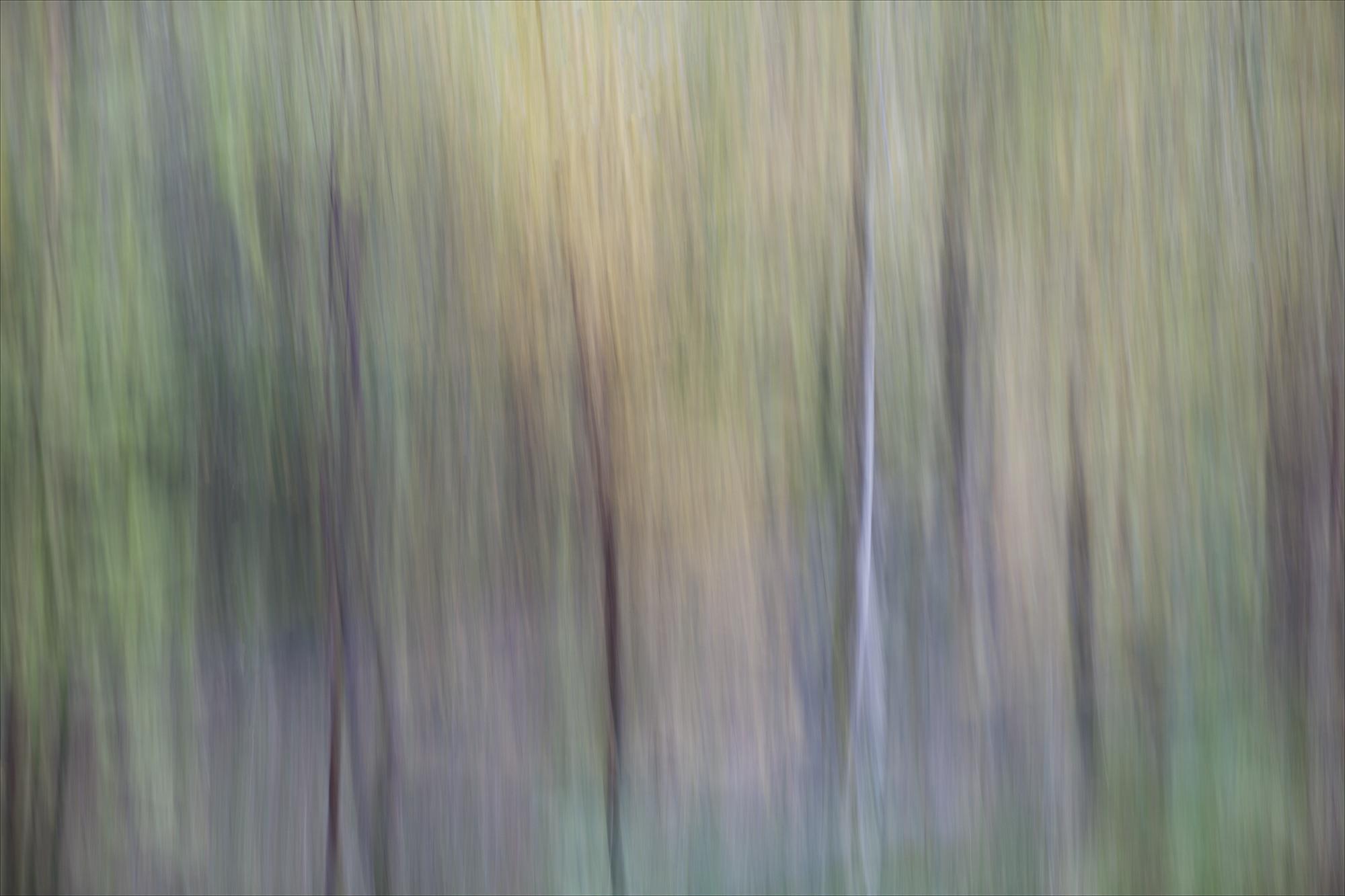 07 Woodland #1.jpg