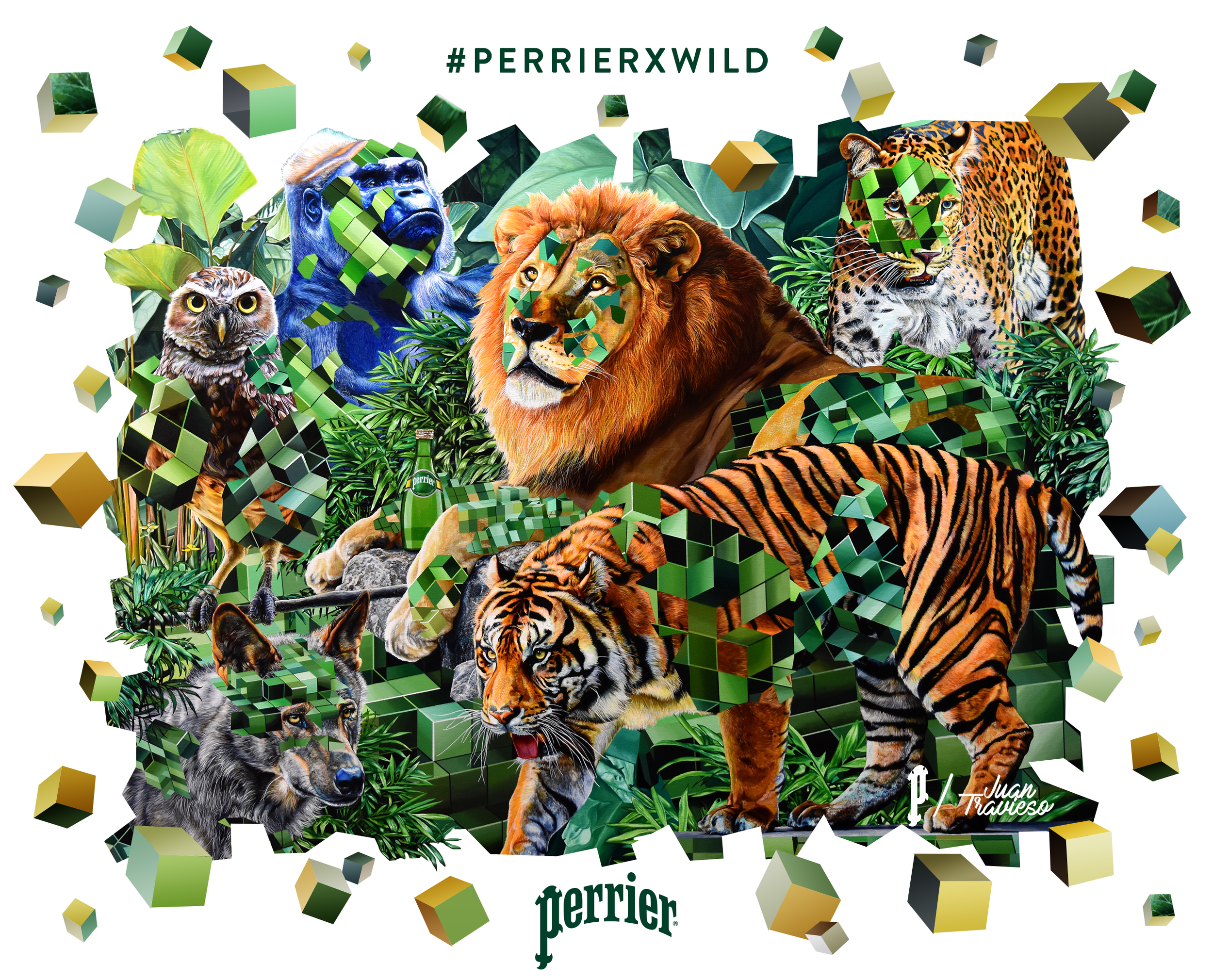 PERRIER WILD - WITH JUAN TRAVIESO
