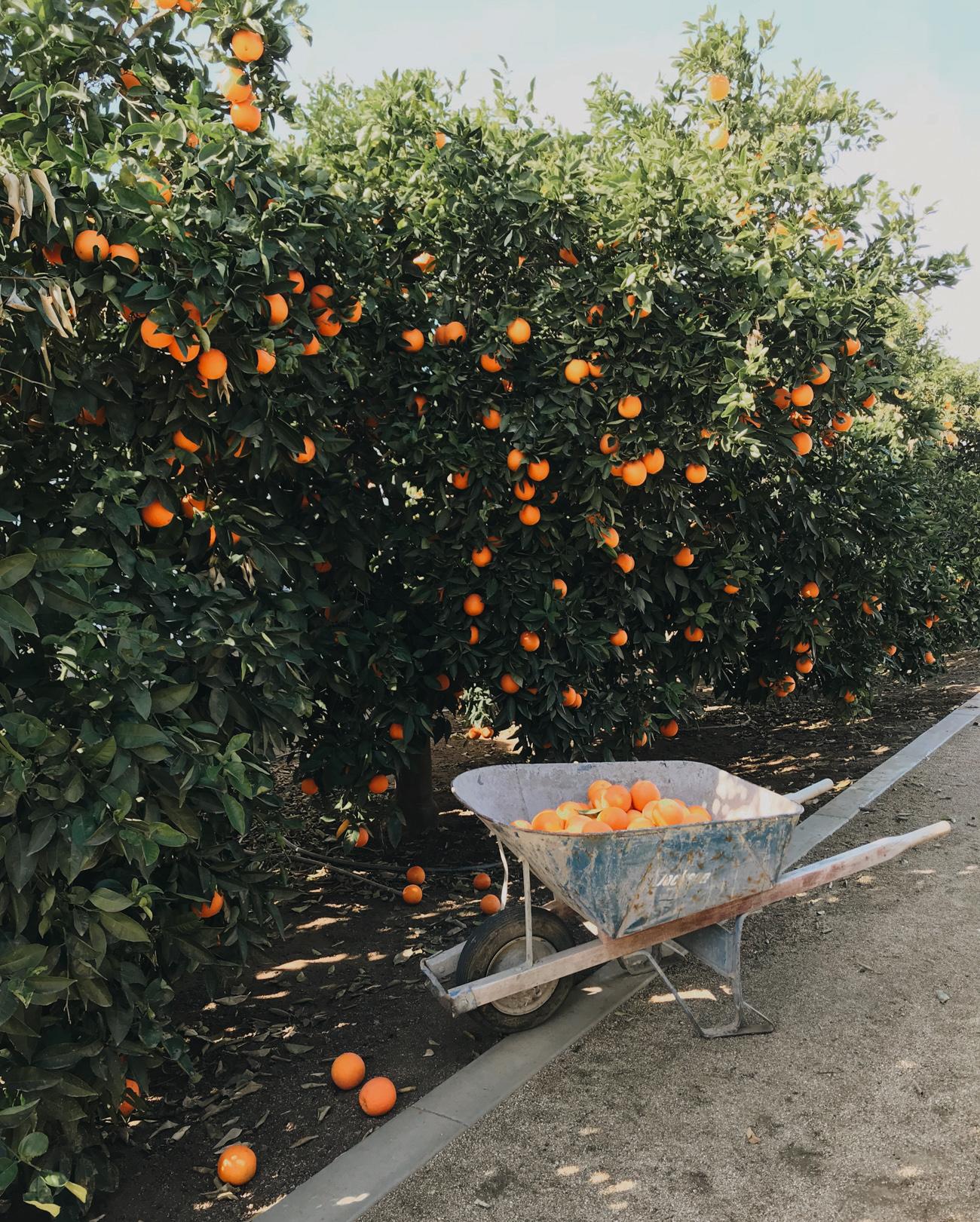 Heather Bullard   Citrus