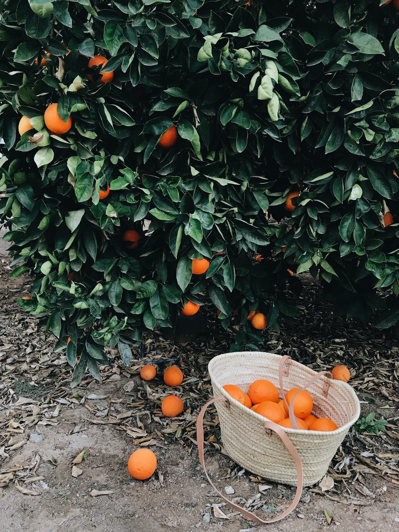 Citrus_Low_1300-8.jpg