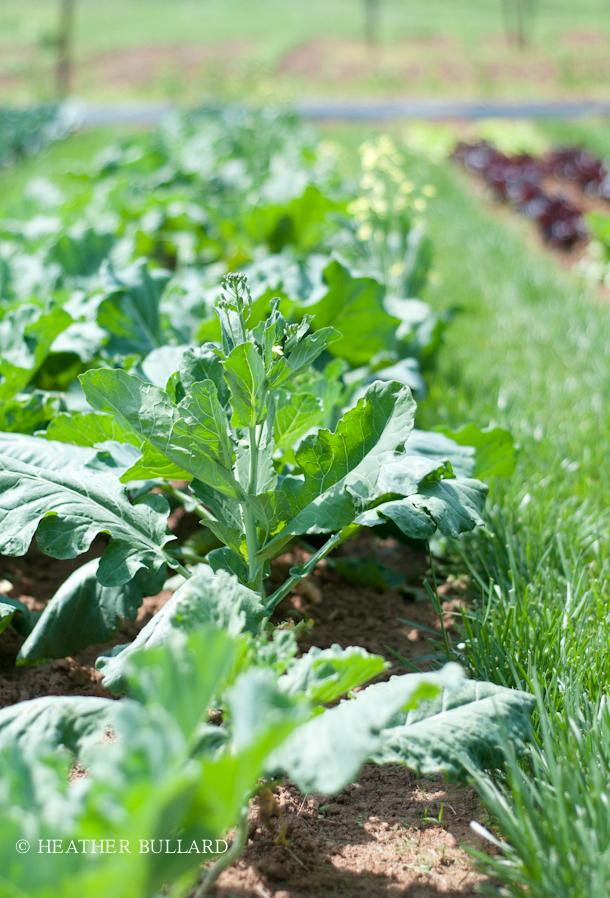 blackberry_farm_garden-206