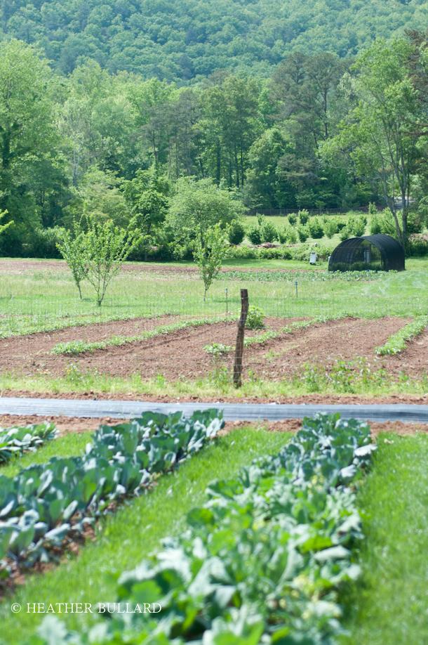 blackberry_farm_garden-207
