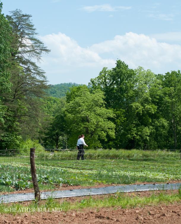 blackberry_farm_garden-210