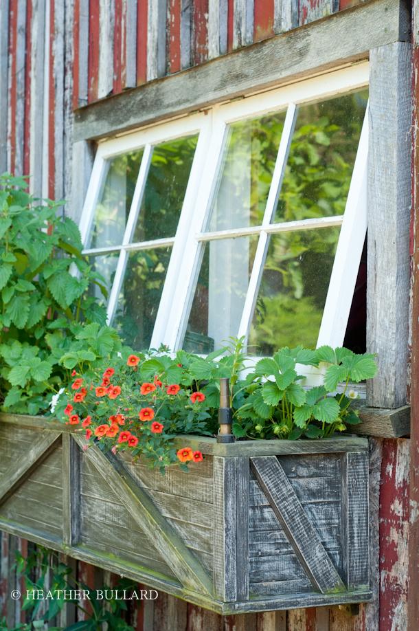 blackberry_farm_garden-213
