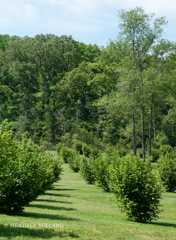 blackberry_farm_garden-220