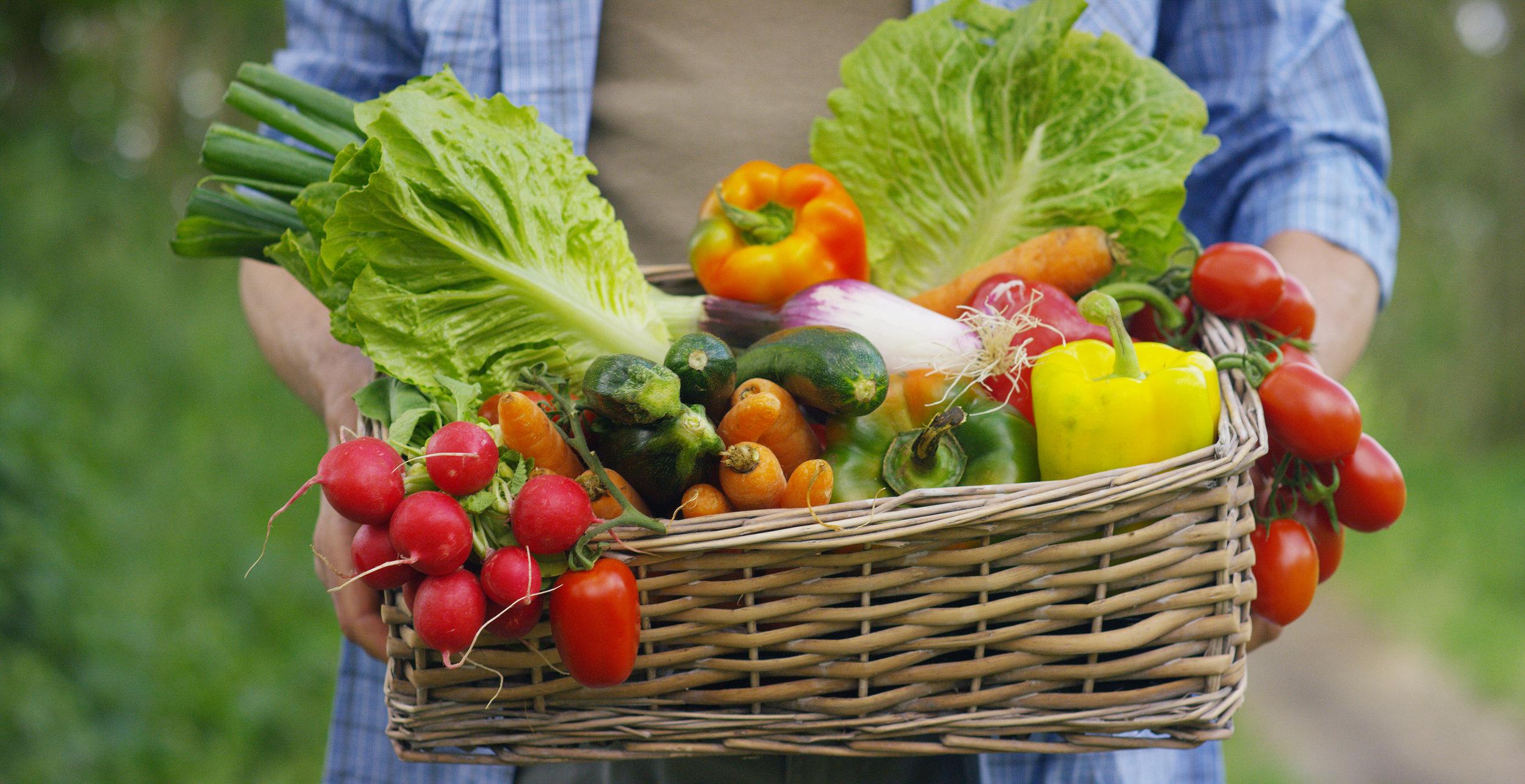 Gracie Diet Food basket.jpeg