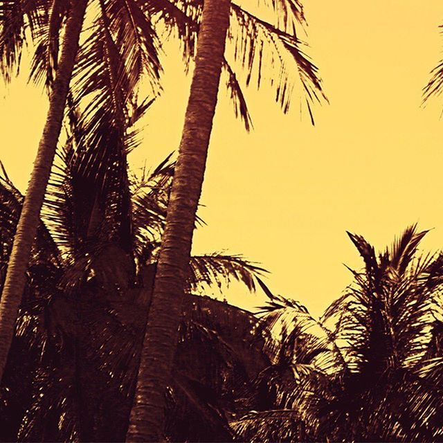 It's always sunny in California with #CaliGoldAvos. 🥑🌅