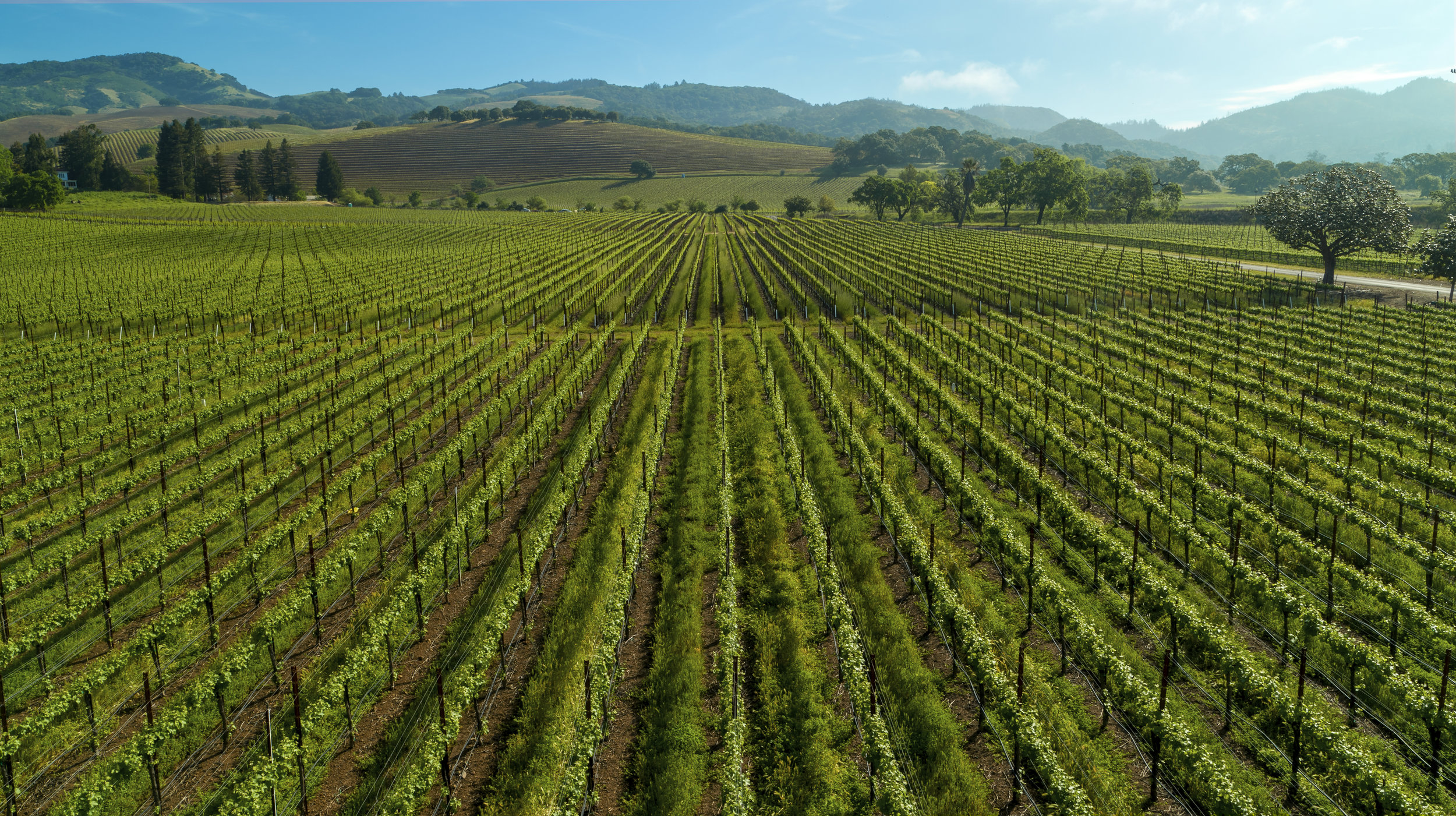 Wine country - Full service aerial and ground-level photography & video production services