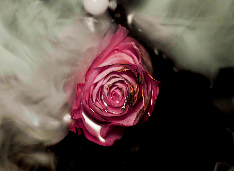 Precious Child,  Divinity Rose,  courtesy of Space Mountain Miami