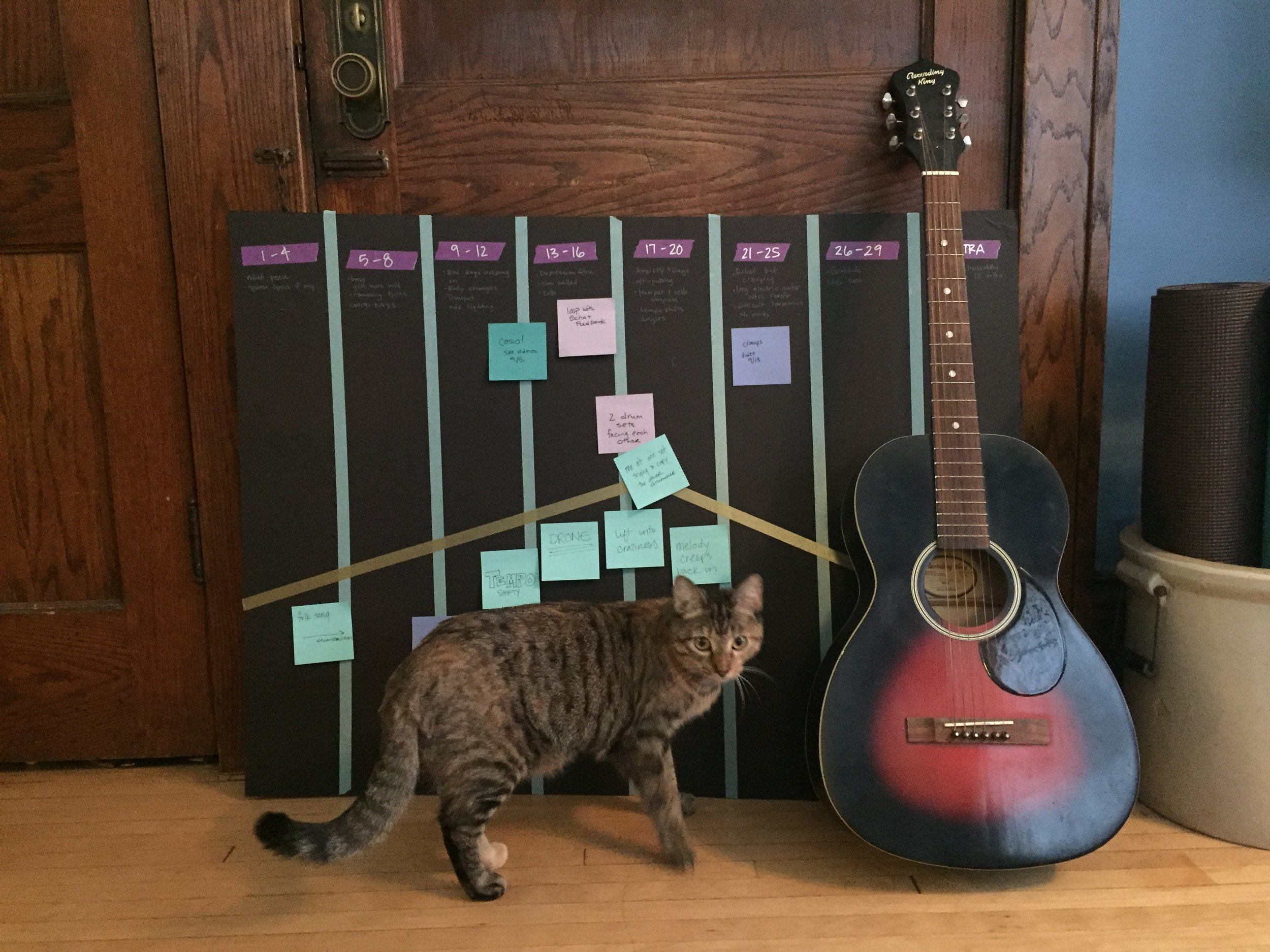 Brianna's cat with her guitar