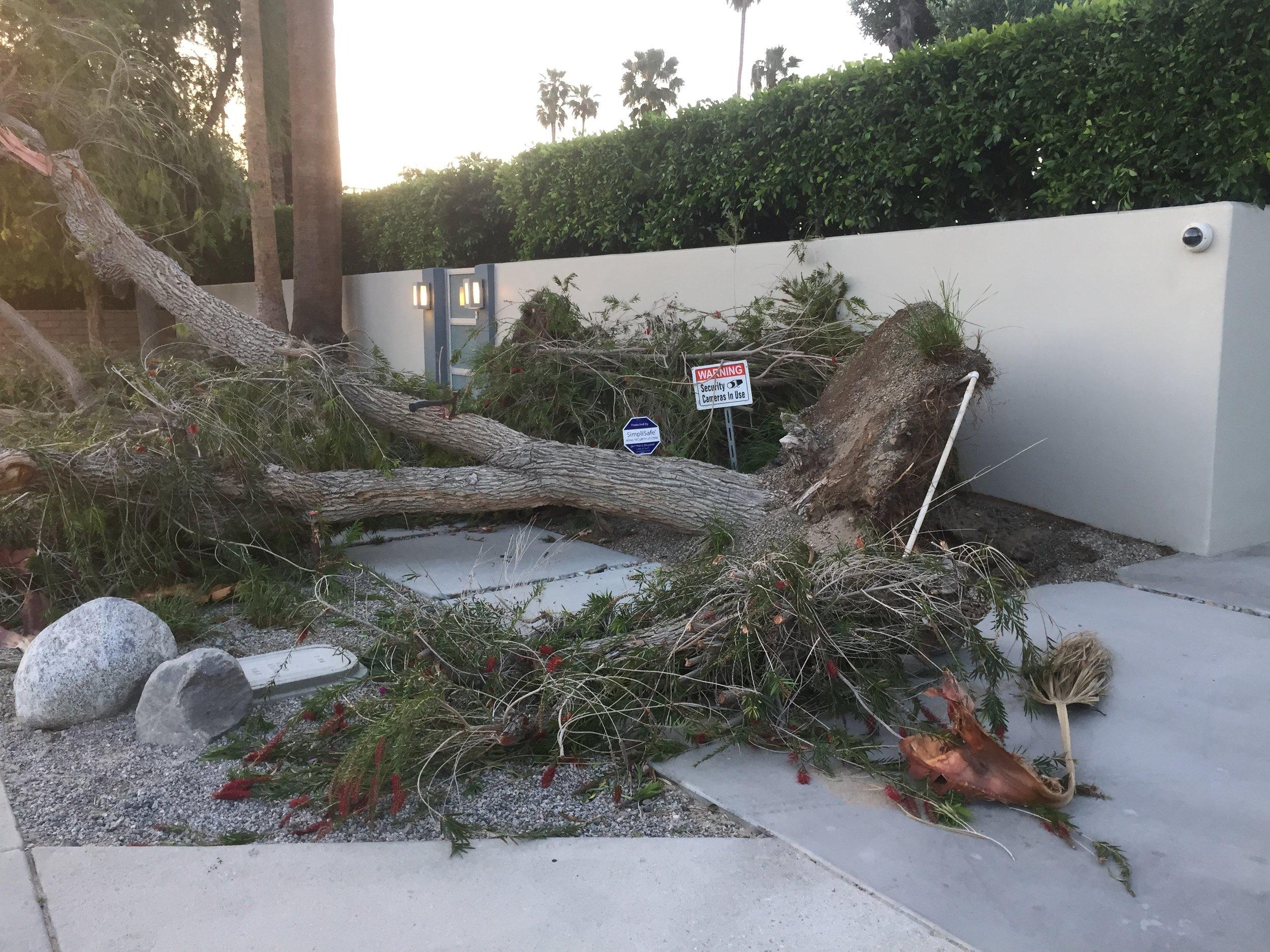 tree damage 2 haboob.JPG