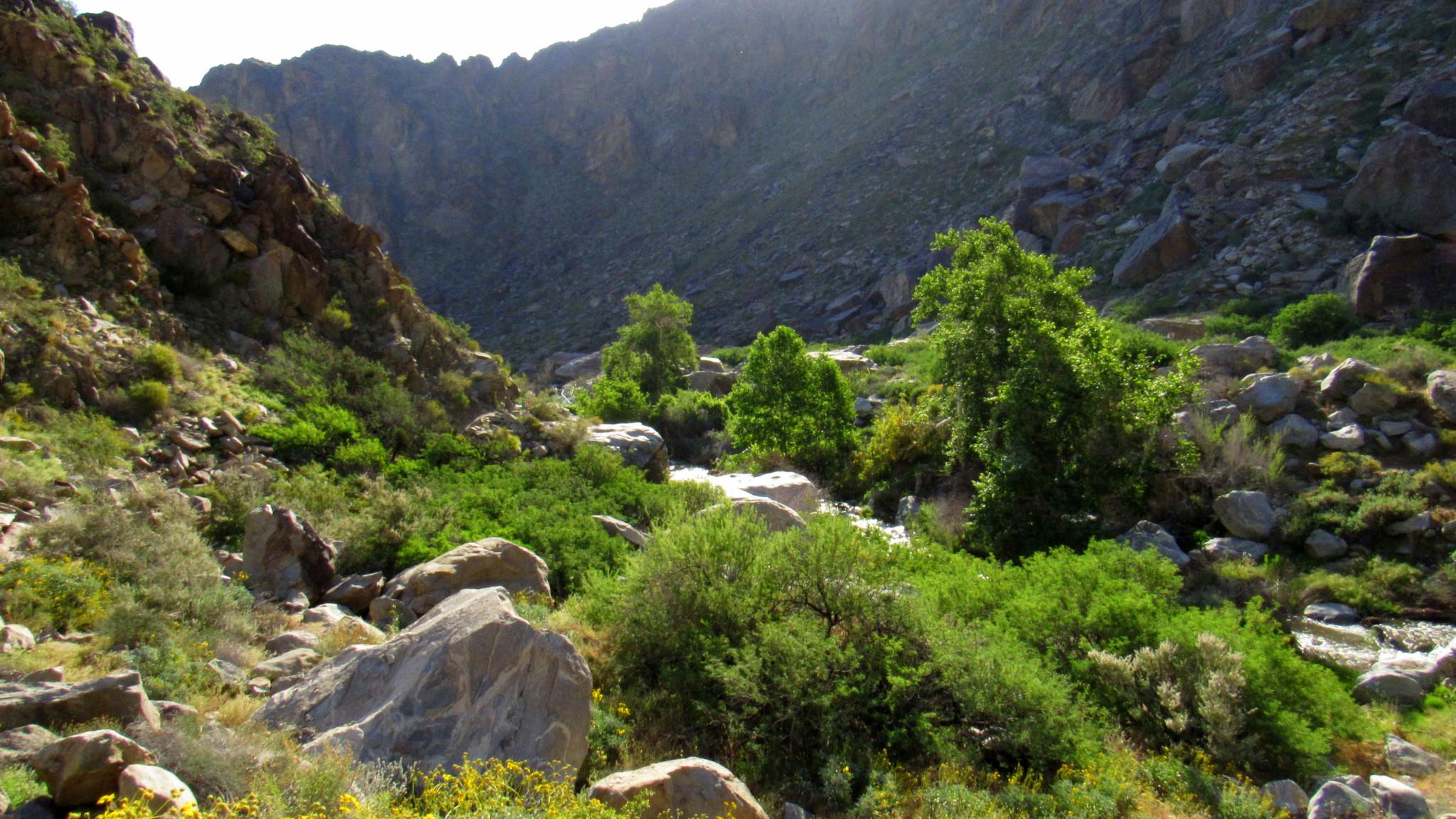 Tahquitz-Canyon-8-1.jpg