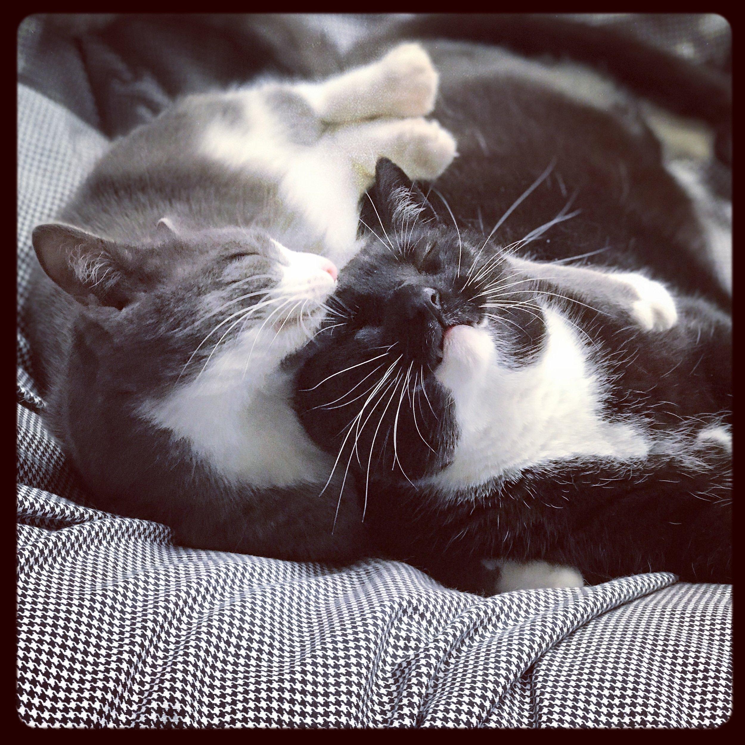 George & Gracie