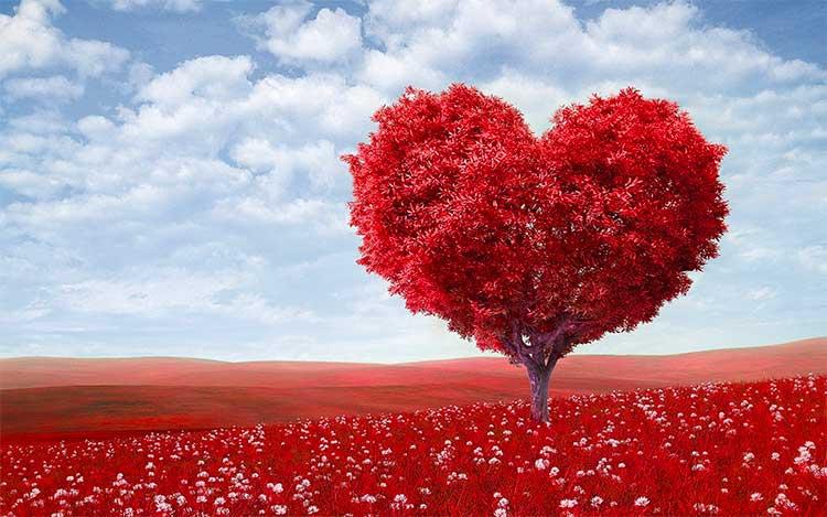 heart-shaped-tree.jpg