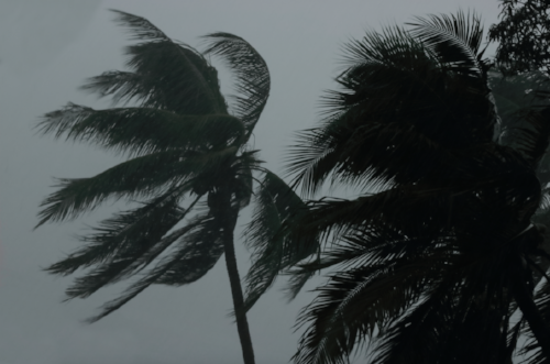 Palm trees blowing in stormy weather