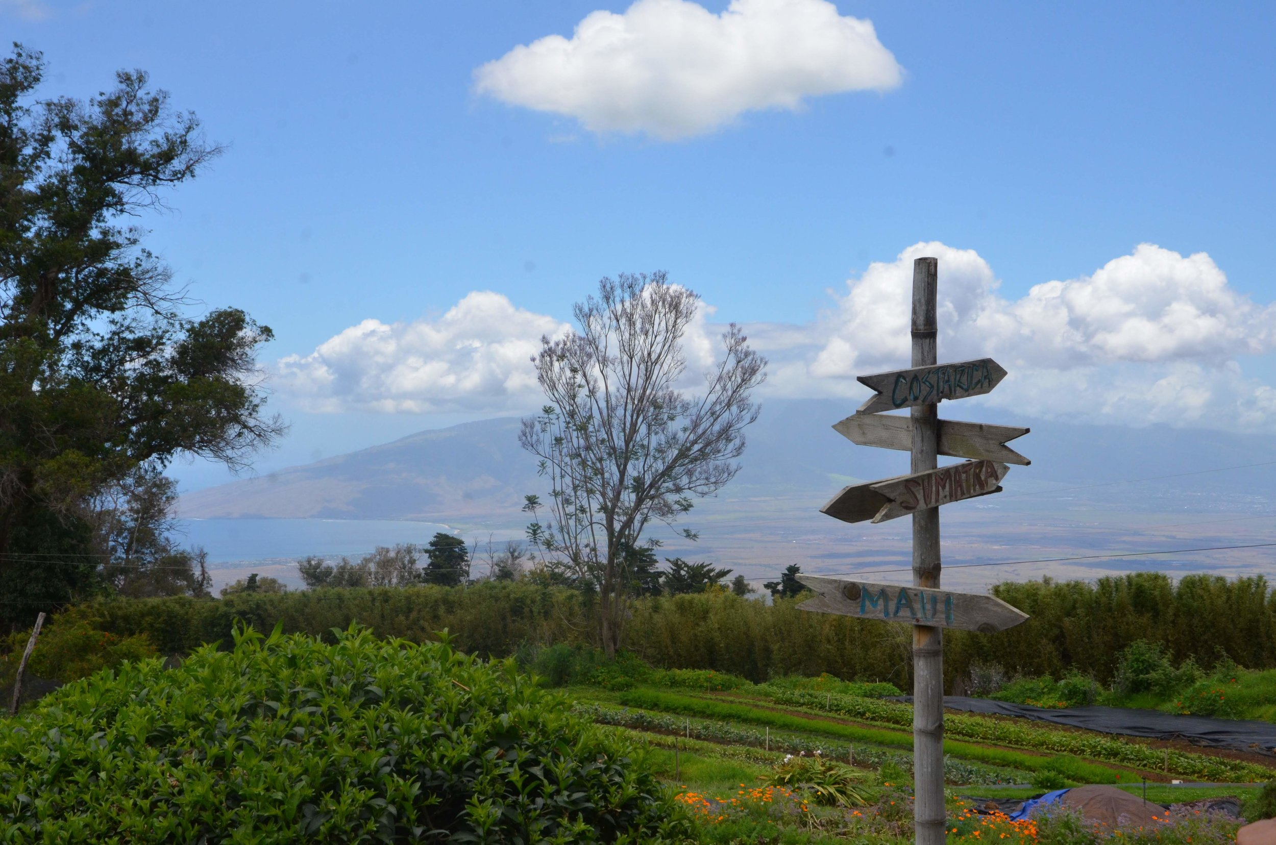 Oo Farm Upcountry Maui
