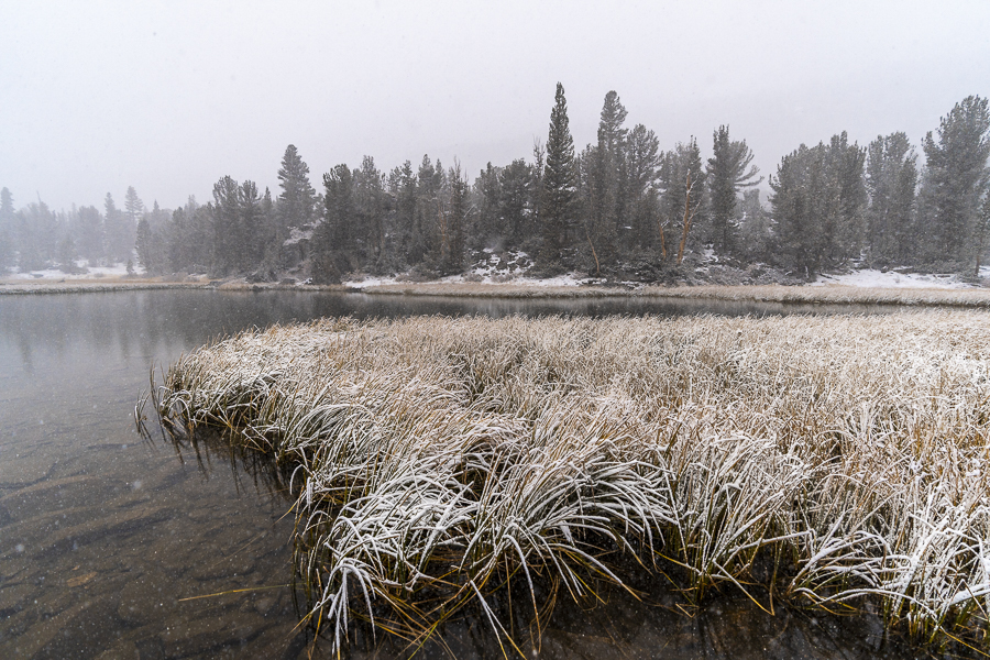 Snowy  Marsh Lake , CA.