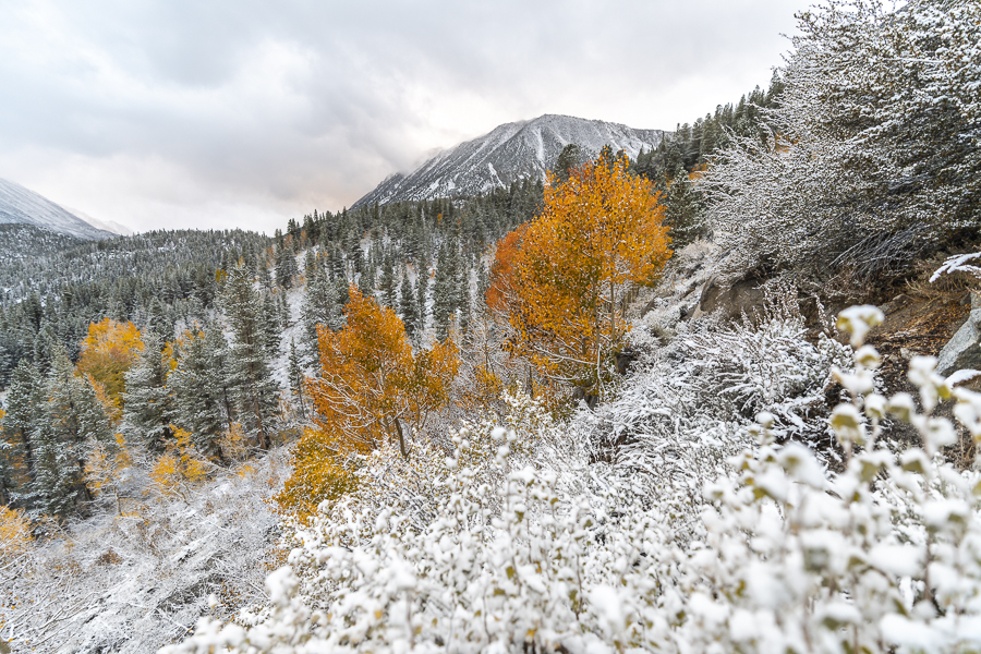 Snowy Sierra Nevada