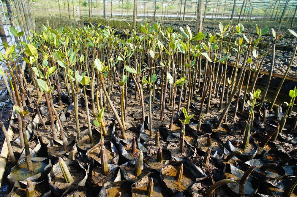 Seedlings Thor Heyerdahl Climate Park.jpeg