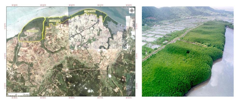 mangrove mapping.jpeg