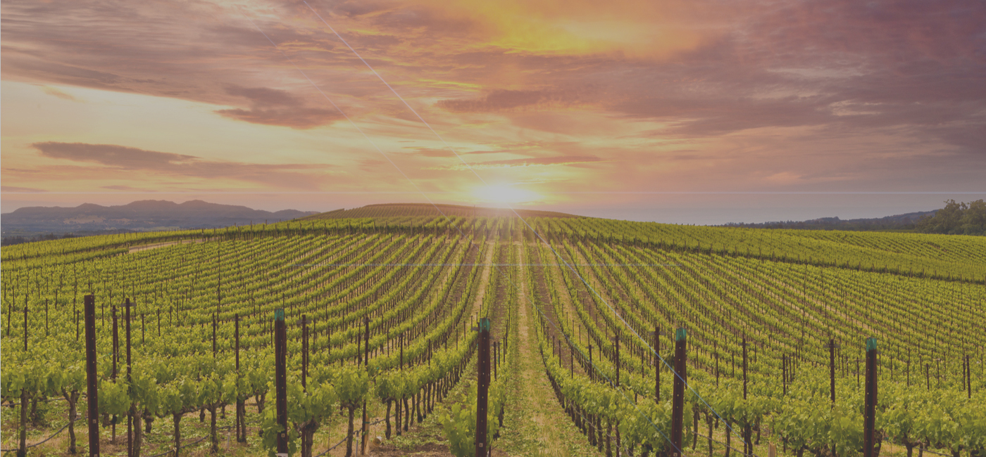 Santa Rosa - Nestled in between 100 year old wine vines, OBL cultivar's are thriving in this unique micro-climate located in Petaluma, CA. OBL has a passion for horticulture and creating unique and beneficial cannabis cultivars in various climates and environments.