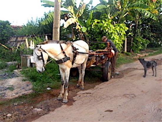 Man and his horse.jpeg