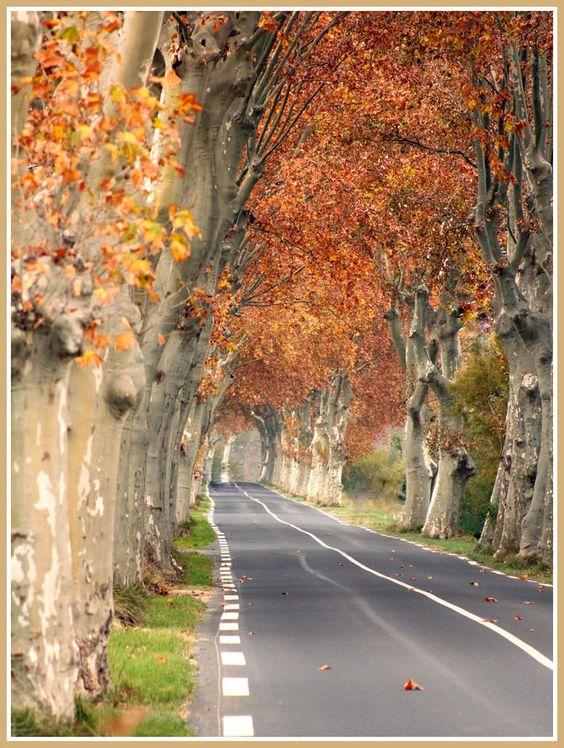 South of France4.jpg