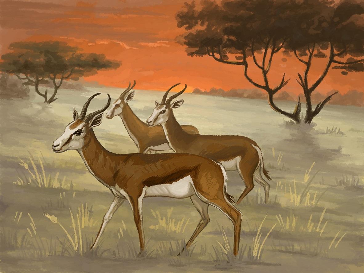 antilopas1.jpg