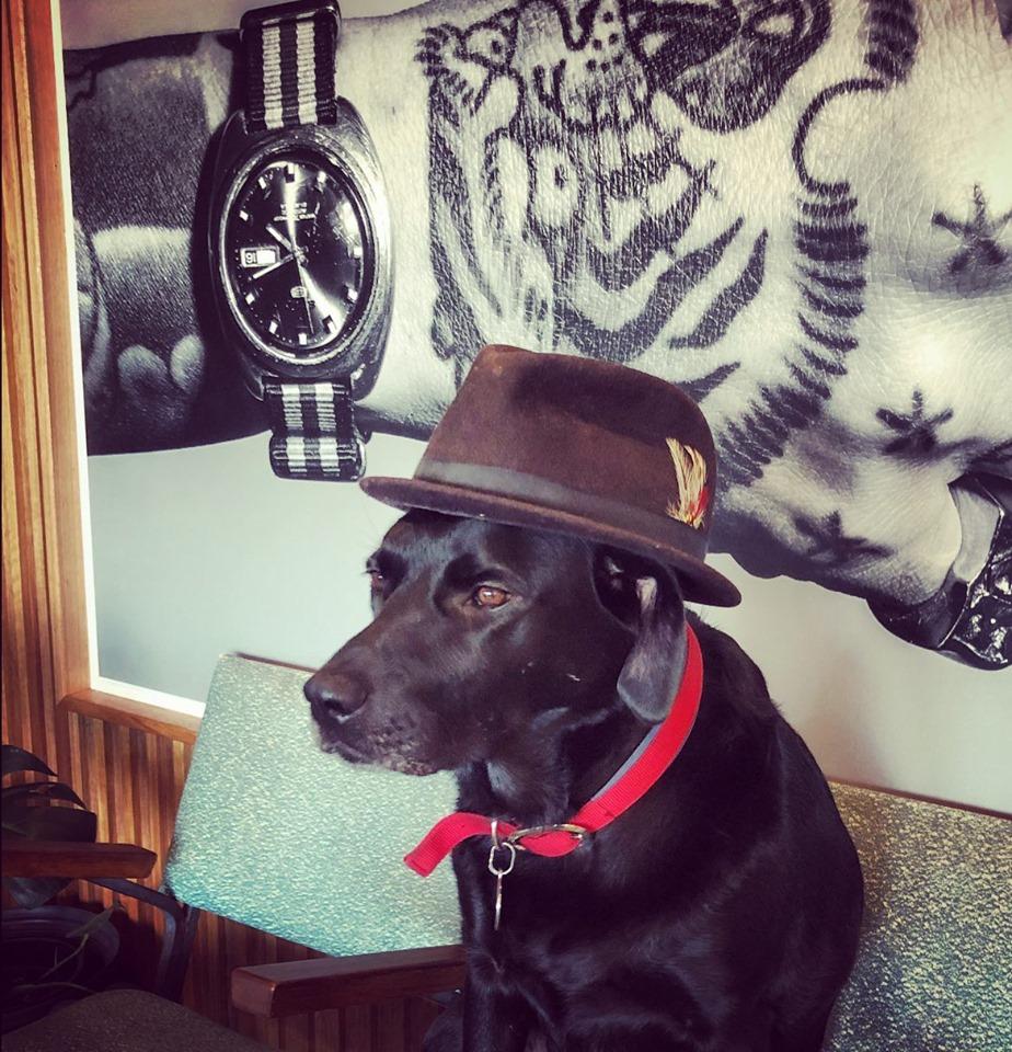 pepper in hat in shop.jpg