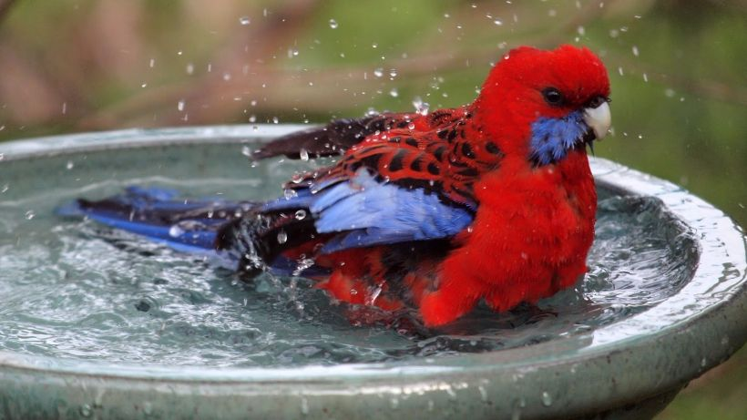 Don't risk losing your bird to the summer heat! Check out these cool tips -