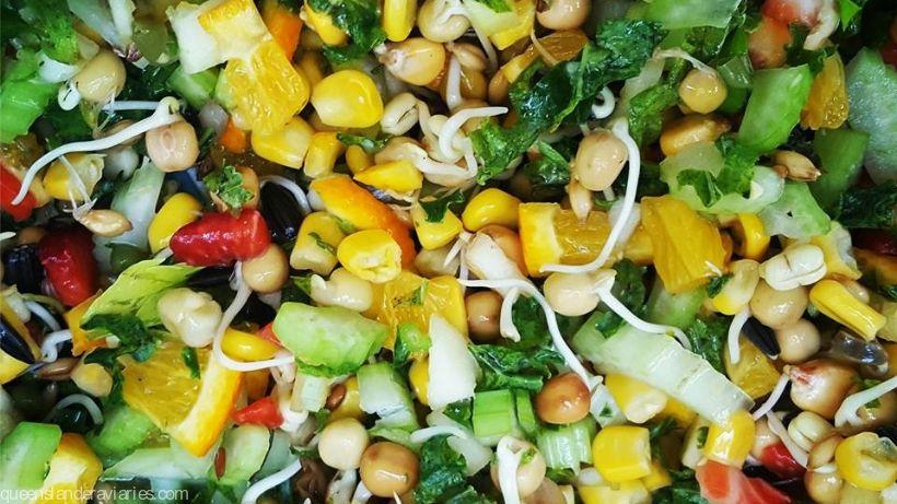 Safe & Toxic Bird Foods -