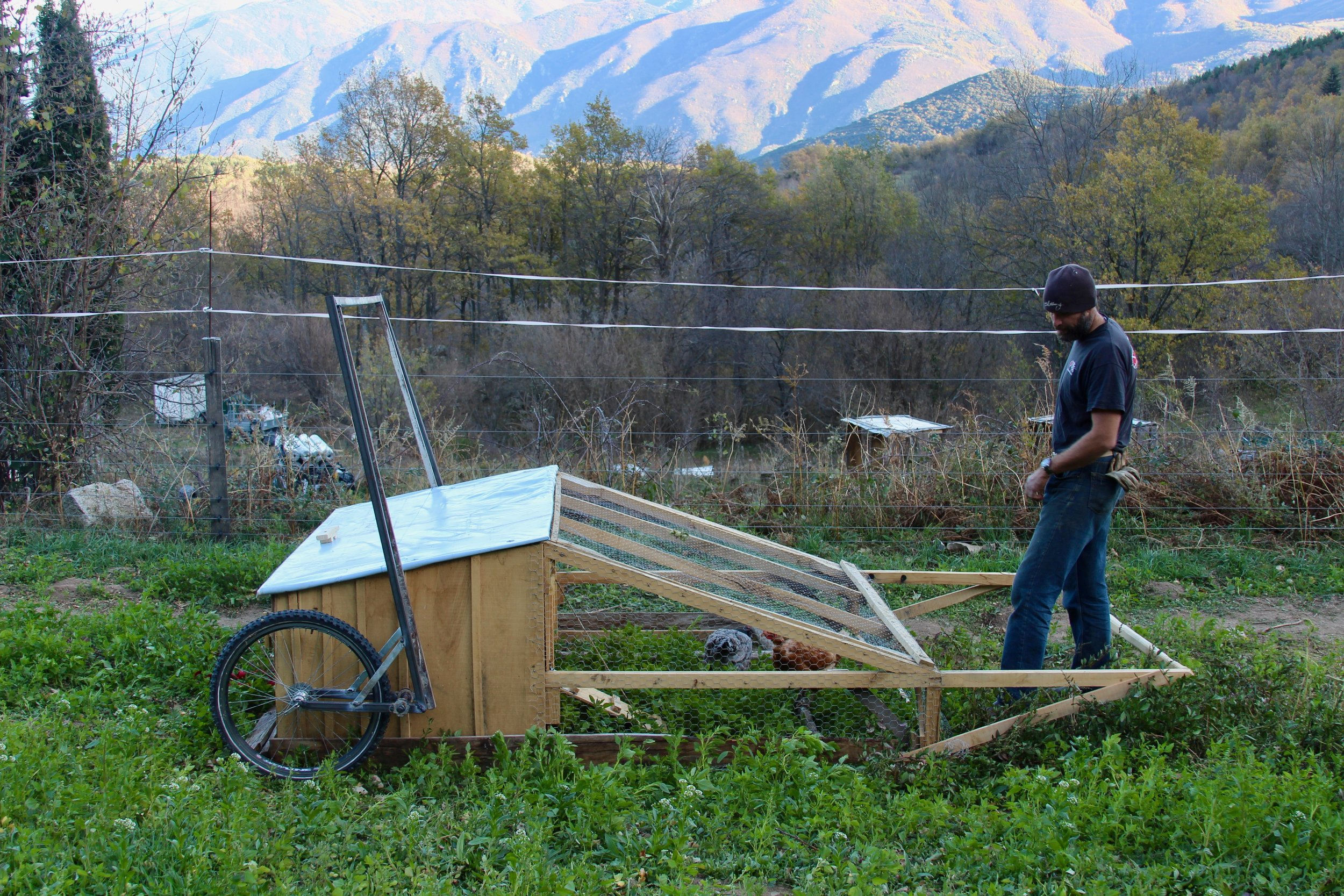 Mobile chicken coop. We have 2 of these