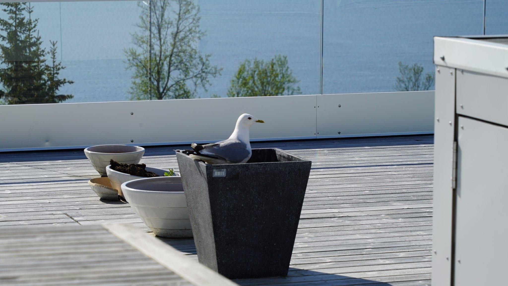 Seagul terrasse1.jpg