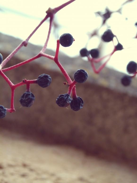 berries-3-e1385367526218.jpg