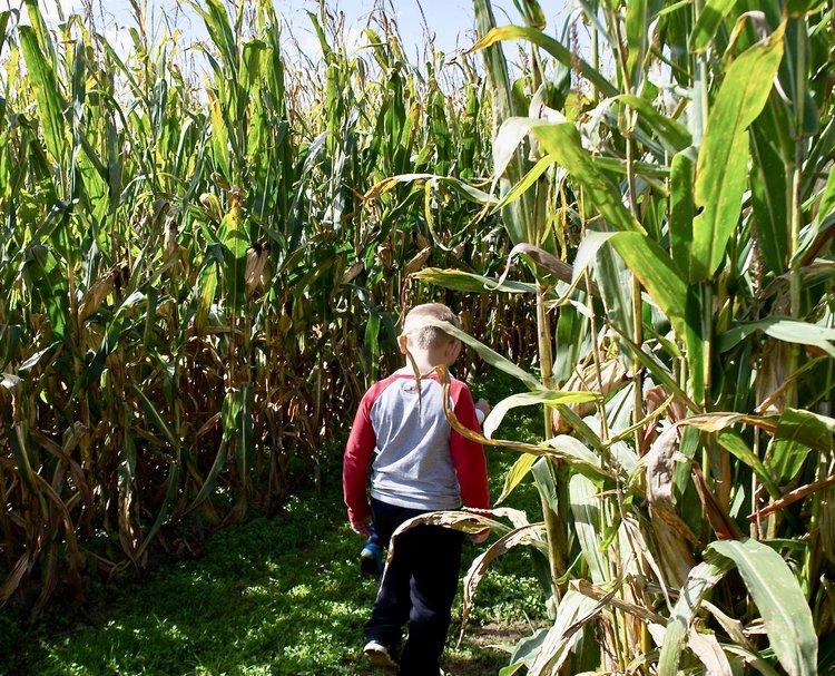 New Salem Corn Maze