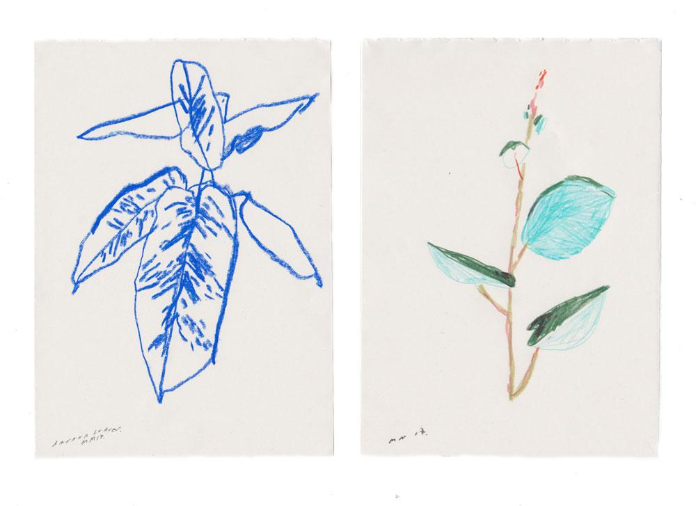 plants-in-blue-cargo.jpg