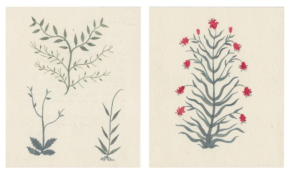 squarespaceindian-blooms.jpg