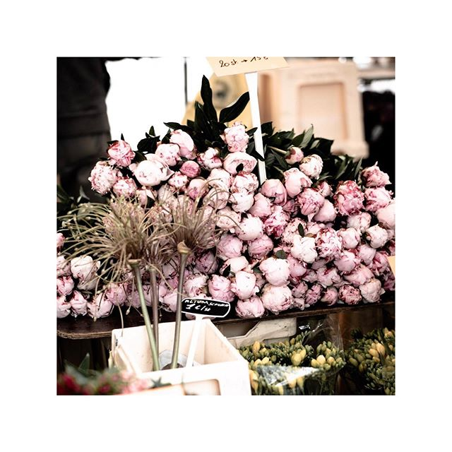 BEAUTIFUL PENTECOST MONDAY * * * #pentecost #pfingsten #flower #happy #happyday #market #antwerp #belgium