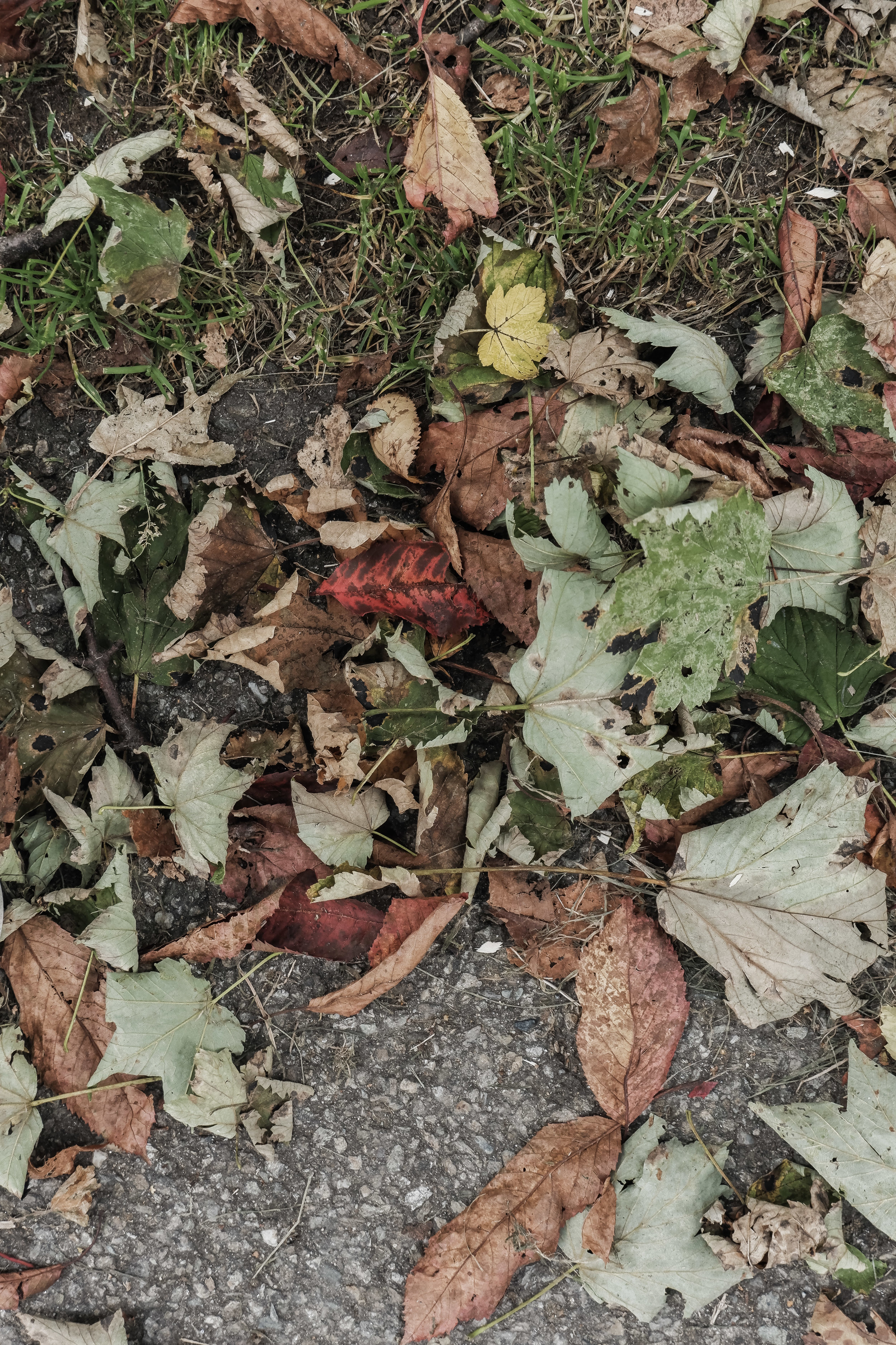 Autumn Walk (2).jpg