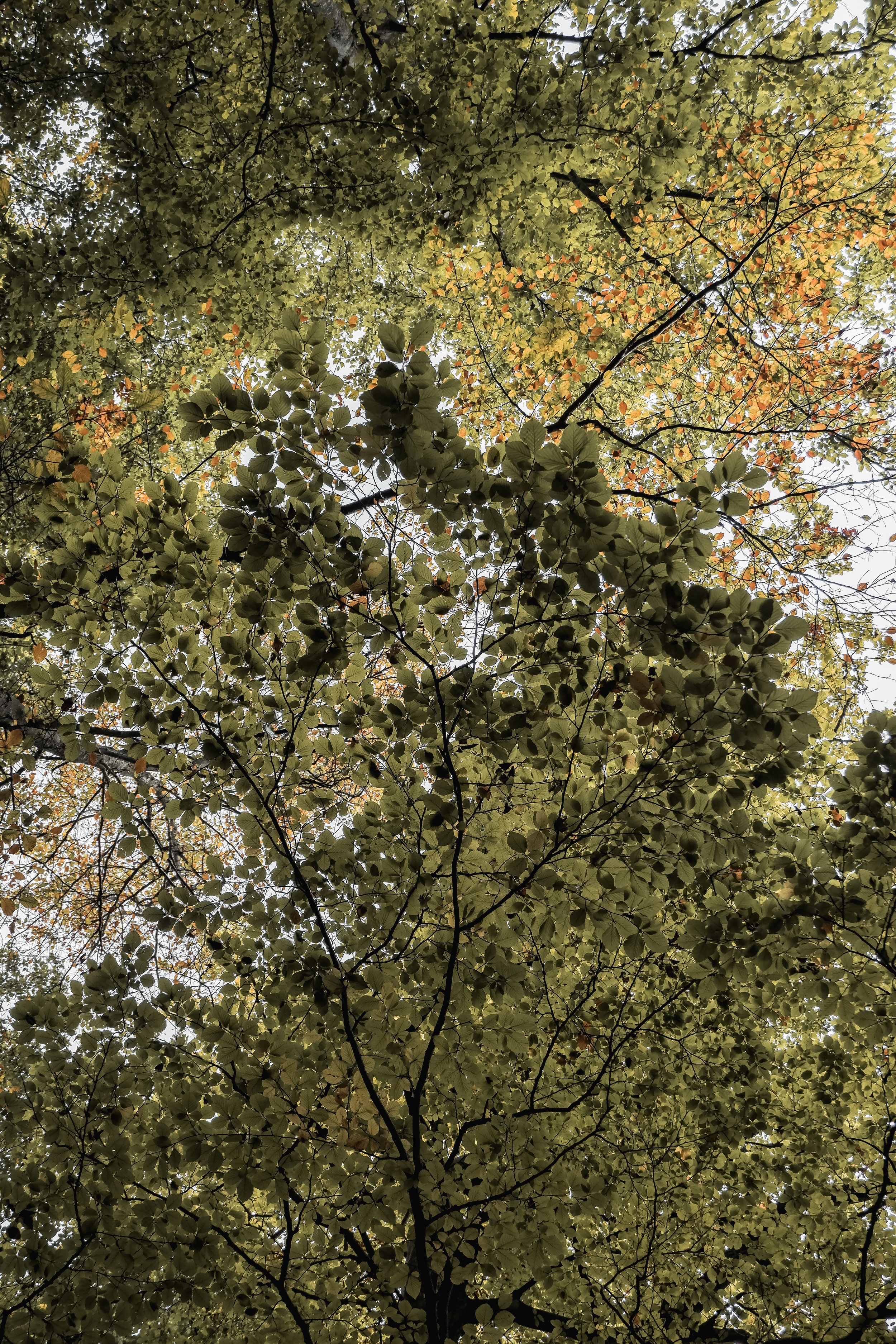 Autumn Walk (3).jpg