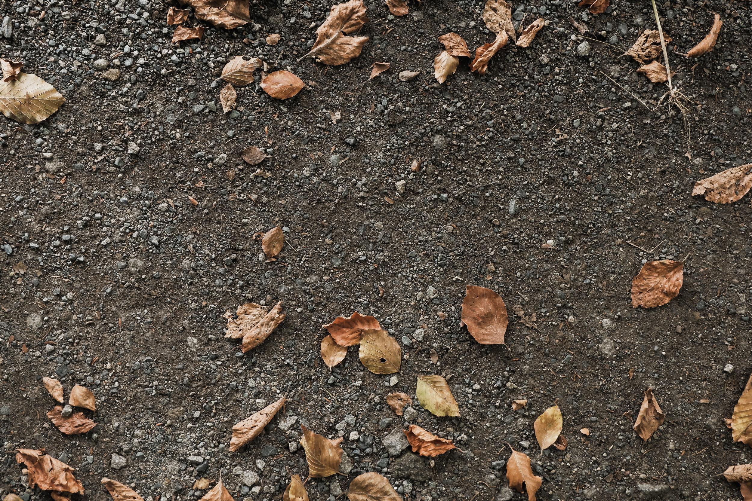 Autumn Walk (5).jpg