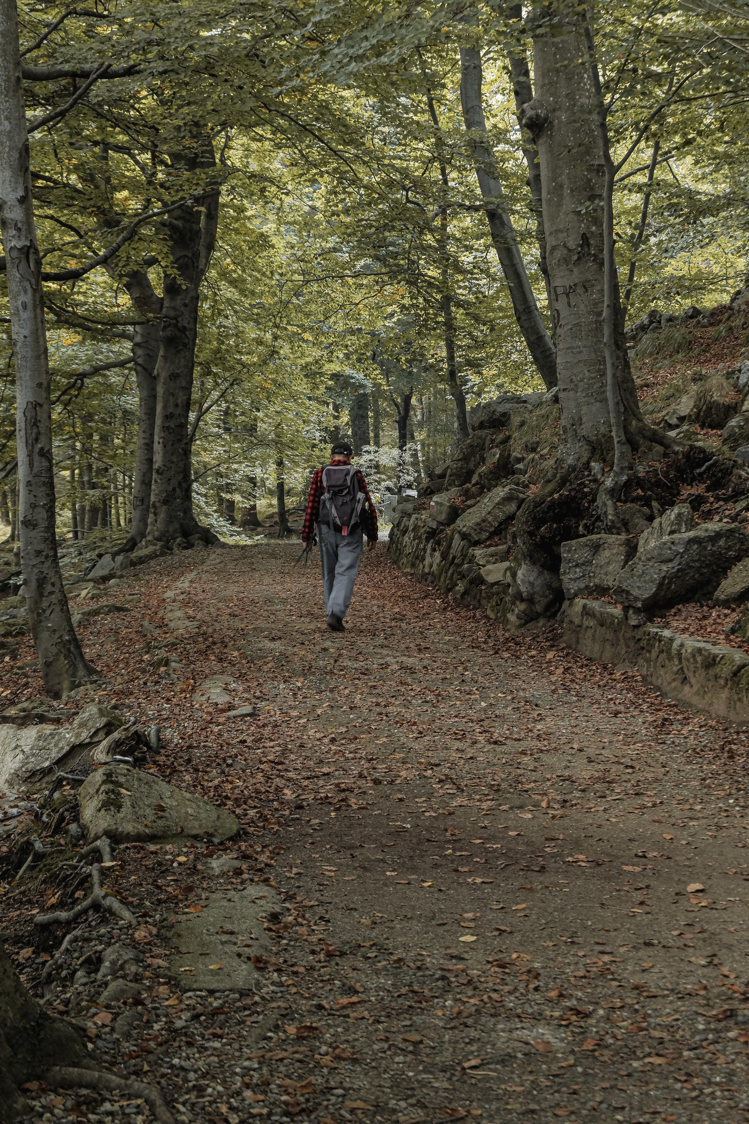 Autumn Walk (6).jpg