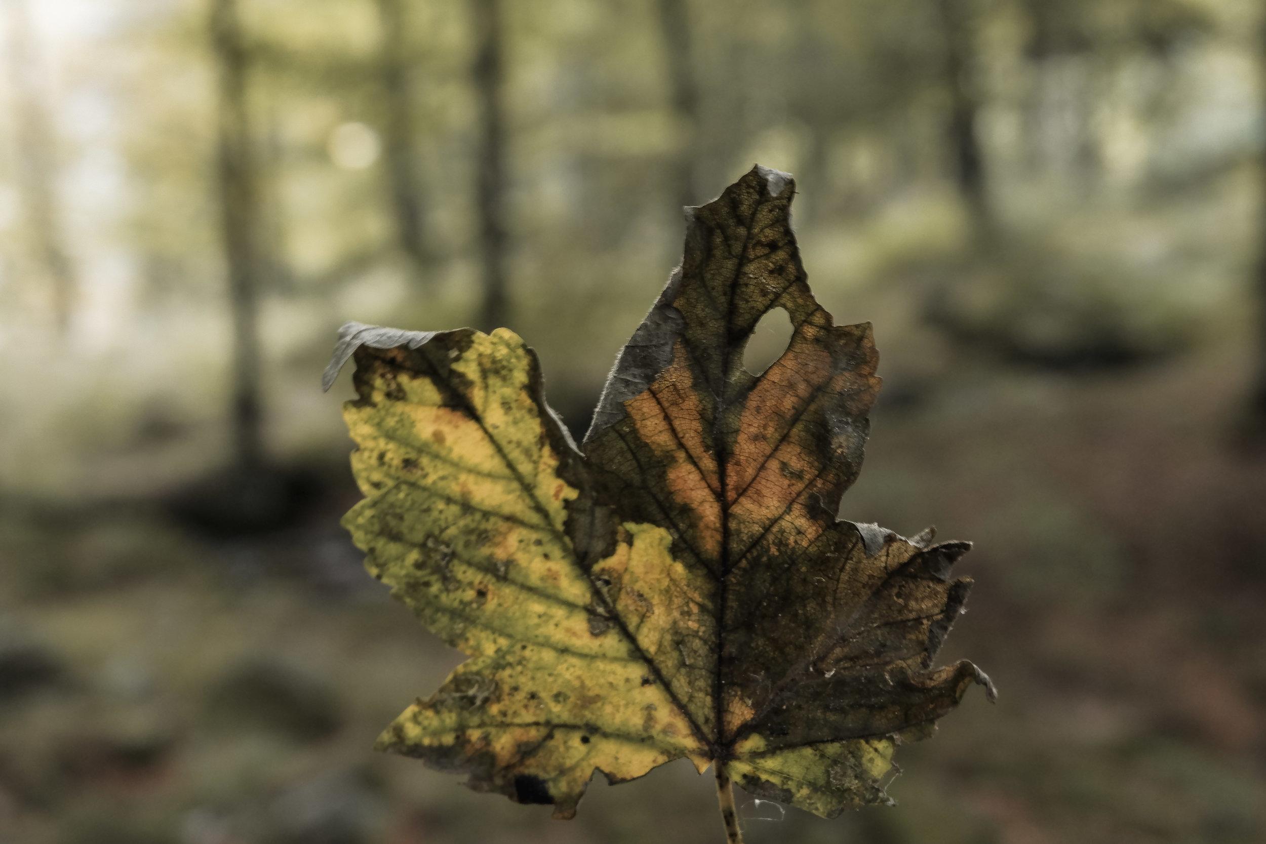 Autumn Walk (11).jpg