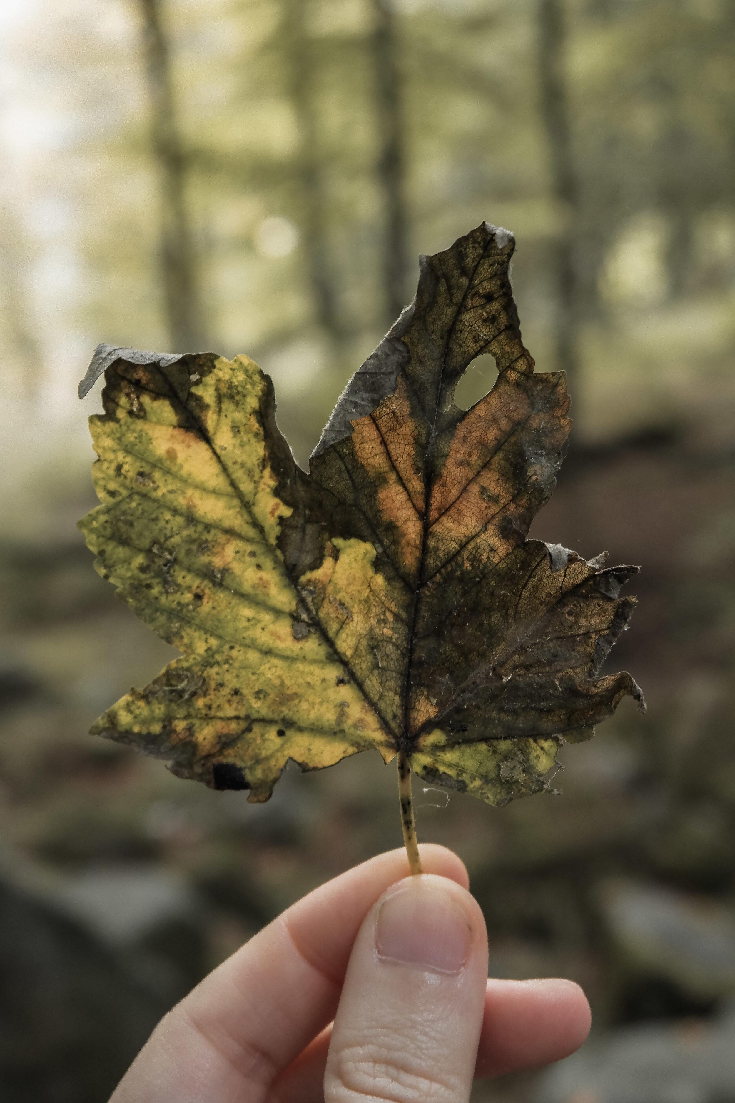 Autumn Walk (12).jpg