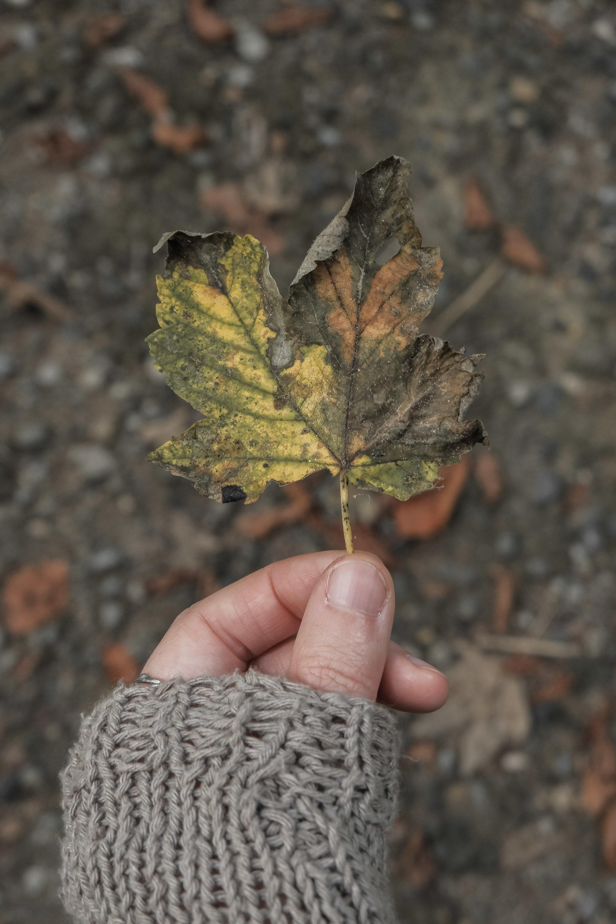 Autumn Walk (13).jpg