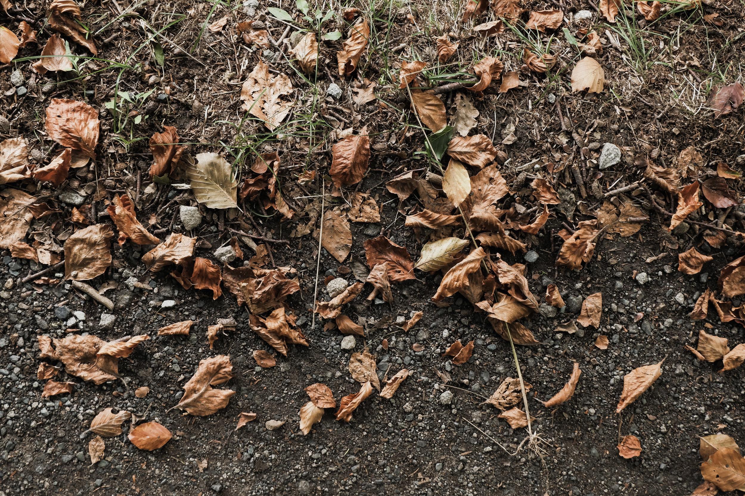 Autumn Walk (17).jpg