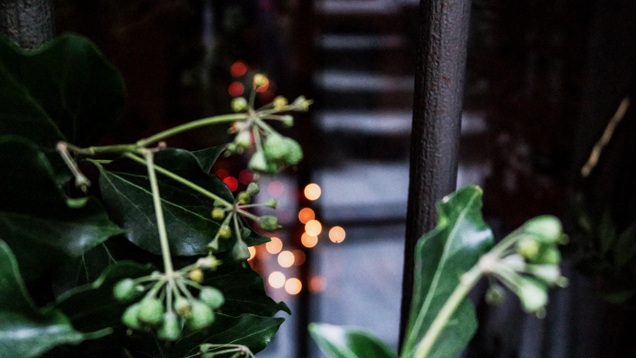 Bard Natale 2015 (19).jpg