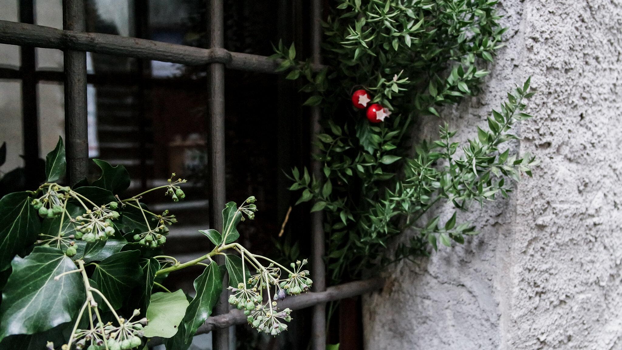 Bard Natale 2015 (20).jpg