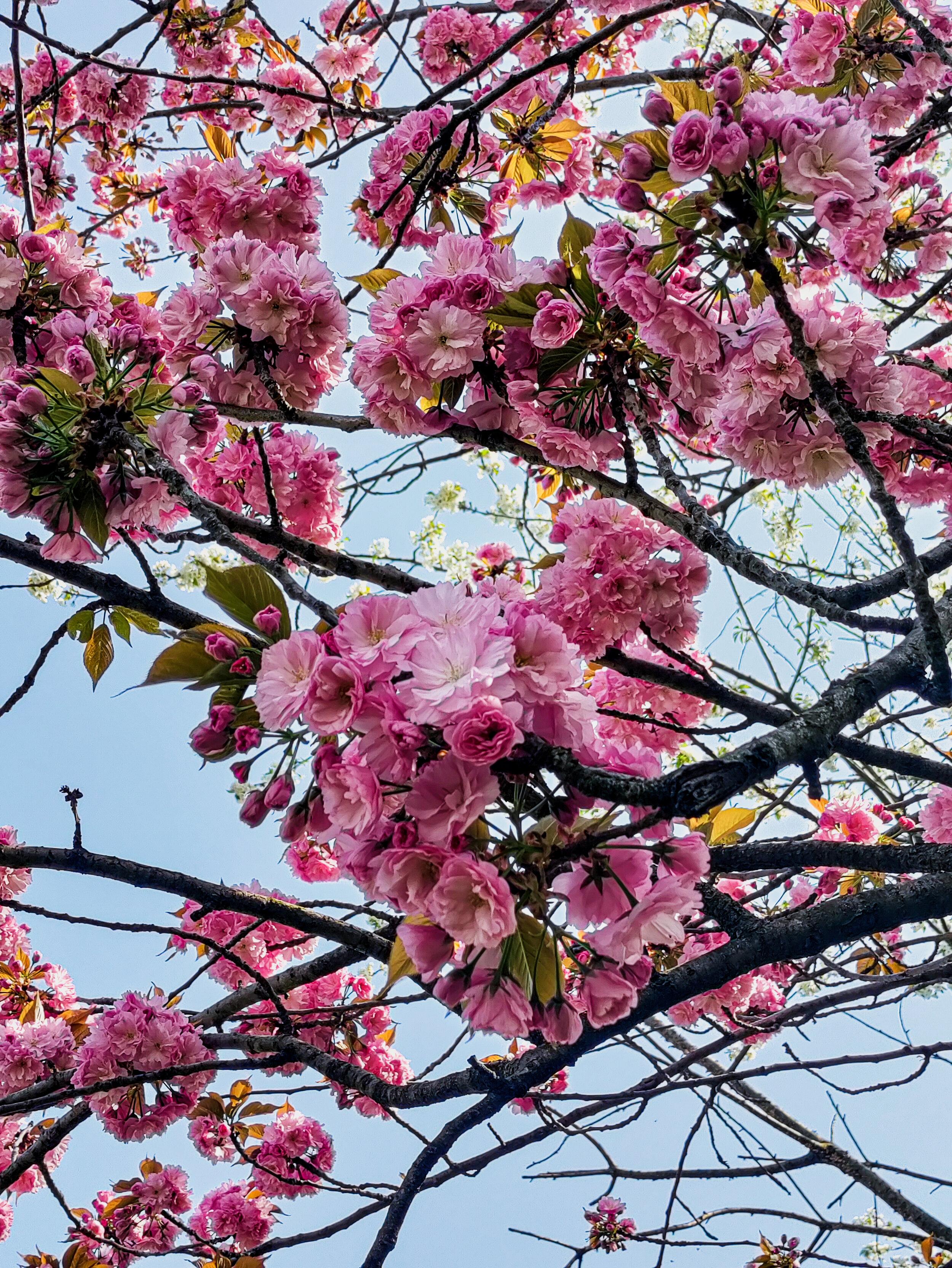 Full Spring (1).jpg