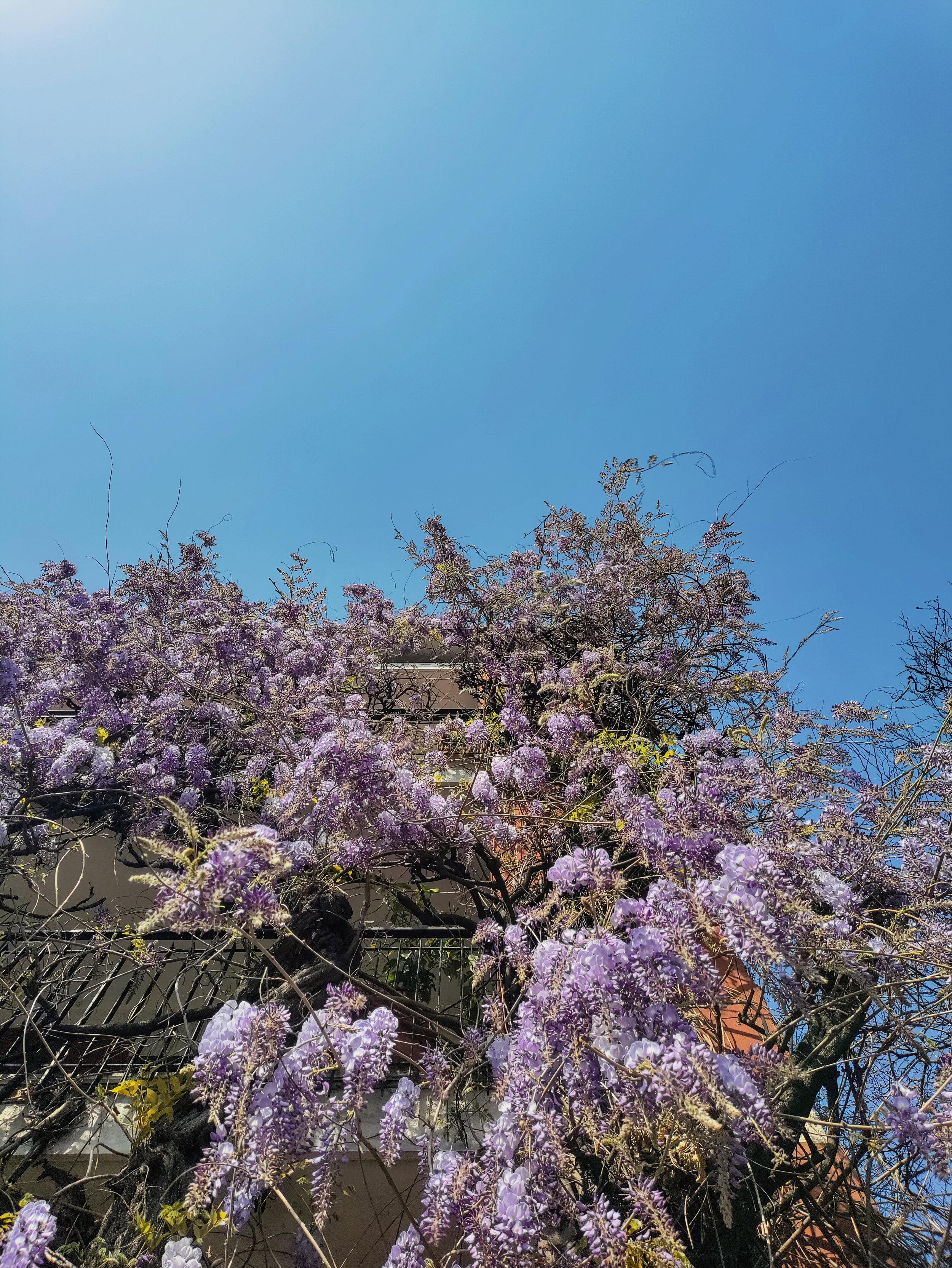 Full Spring (10).jpg